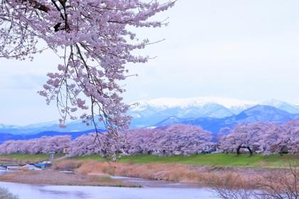 (日本語) 【おすすめ旅 春】蔵王連山の残雪に映える一目千本桜と日本三景松島を訪ねる春の宮城路の旅