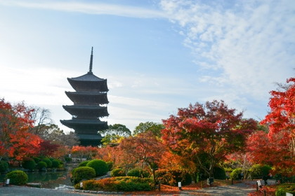 [Autumn in Japan]  Visit Kyoto in Autumn
