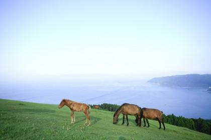 都井岬 野生の馬