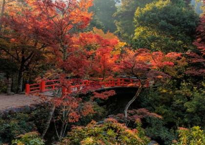 宮島紅葉谷公園の紅葉