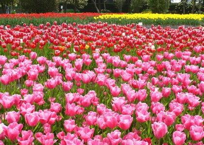 【おすすめ旅 春】世界遺産白川郷と富山を訪ねる旅