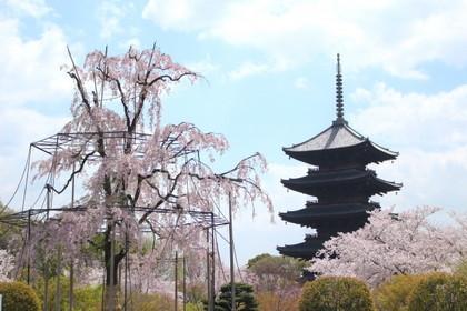 【おすすめ旅 春】世界遺産京都の春を楽しむ旅