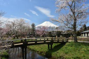 oshino-hakkai-haru